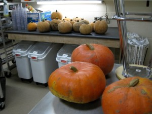 in the forefront, Cinderala Pumpkins (that's their name!) and the tastiest little pumpkins in Ontario!