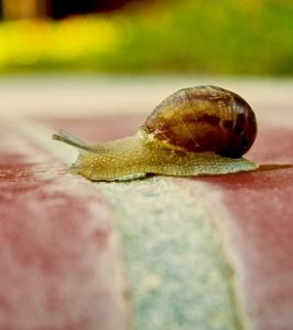 snail--slowly-crossing-the-finish-line-mark-hendrickson